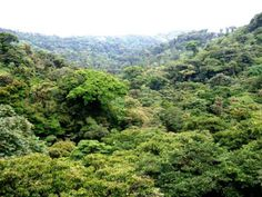 Monteverde (from post: Choosing A Costa Rica Hotel: Are You A Knowledgeable Traveller Or An Informed One?)