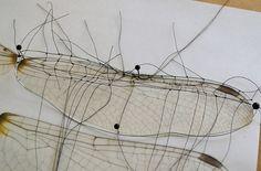 Dragonfly wing by Anne van Midden, via Flickr. Work in progress.