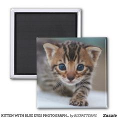 KITTEN WITH BLUE EYES PHOTOGRAPHY FRIDGE MAGNET Eye Photography, Photo Magnets, Succulents Diy, Business Supplies, Dollar Stores, Invitation Cards, Blue Eyes, Cats And Kittens, Art For Kids