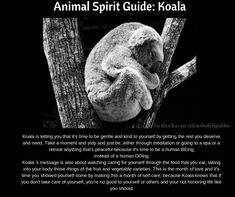 Spirit guide Koala and meaning Animal Meanings, Dream Meanings, Spiritual Meaning, Power Animal, Animal Totems, Spirit Guides, Spirit Animal, Tat, Warriors