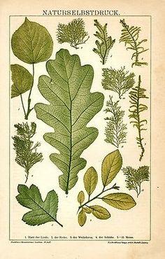 Leaves,1894