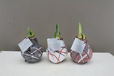Christmas Flowers, Christmas Christmas, Xmas, Personalised Christmas Presents, Amaryllis Bulbs, Planting Bulbs, Gifts For Mum, Unusual Gifts, Large Flowers