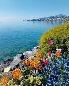 Montreux, Switzerland by ellchintya