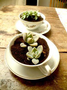 Succulent tea-time.