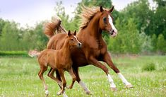 Paarden in de wei. www.landidee.nl #horse #young #mother #beautiful #spring Foto: Shutterstock
