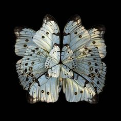 Mimesis is an ongoing series gathering photomontages of Parisian photographer Seb Janiak. These images represent wings of insects and especially butterflies that bloom like flowers' petals. He finds these rare specimens in antique stores or taxidermy shops. He retouches them afterthat in order to make flowers similar to the Rorschach test.
