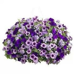 These would make beautiful porch baskets