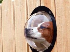 The Dog Peek is an acrylic dome that lets your pet see what is happening outside. - $25.00