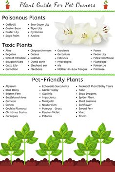 Plant Guide for Pet Owners - Outdoor Plants, Garden Plants, Outdoor Gardens, Outdoor Dog, Cat Safe Plants, Plants Toxic To Dogs, Cat Plants, Poisonous Plants, Plant Guide