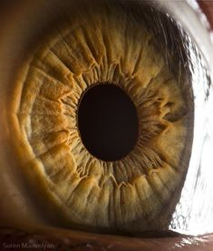 so this is what our eye looks like up and close!
