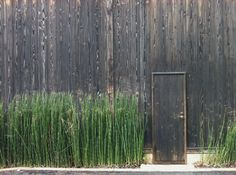 Well composed use of Snake Grass.