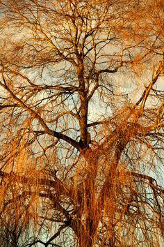 'Trauerweide im Winterkleid' von Heidrun Lutz bei artflakes.com als Poster oder Kunstdruck $18.03