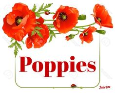 Pretty Flowers, Wild Flowers, Remembrance Day Poppy, Color Palate, Gerbera, Red Poppies, Color Themes, Flower Power, Planting Flowers