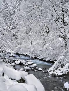 Snow on Boulder Creek Photo by Steve Terrill Forest Photography, Winter Photography, Landscape Photography, Levitation Photography, Snow Forest, Snow Covered Trees, Winter Wallpaper, Winter Wonderland Wallpaper, Winter Scenery