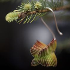 These unique holiday ornaments made from plant cuttings will last well through the winter season and beyond. After the holidays, the cuttings will happily take to planting and may even begin to sprout new roots while still hanging on the tree.