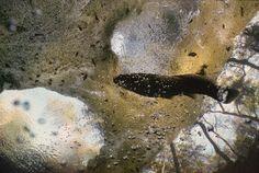 Underwater-in-Floridas-Swamps-07-685x459