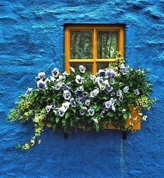 | Window box, Kinsale, Ireland