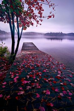 Time for an Autumn canoe trip...I wish you were here to join me