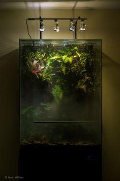 Vic's display paludarium