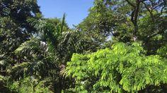 Tiguera 360: Vista da Sacada na Frente da Casa. IMG_8269. 114,7 MB. 09h5...