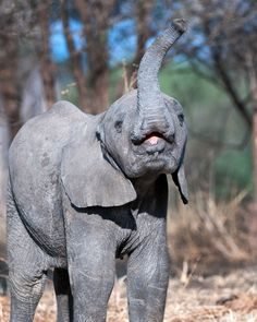 Elephant. Photo credit: Billy Dodson #ivoryforelephants #elephants #stoppoaching