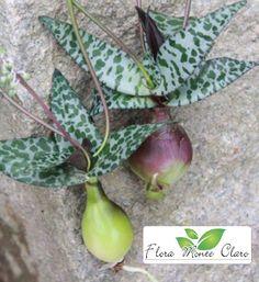 Flora, Plant Decor, House Plants, Planting Succulents, Garden, Vines, Orchids, Suculent Plants, Cactus Plants
