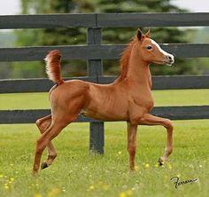 Foal. Look how proud. :)