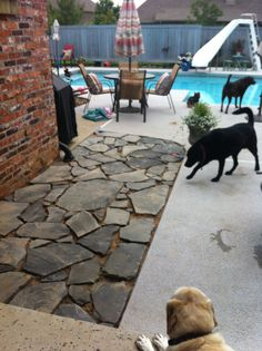 I laid flagstone on both sides of the walkway that leads from the patio to the pool.  It was a monster project, but well worth the time and labor!  This picture was taken before I grouted.