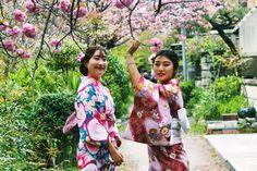 Geysha in spring  Kyoto, Japan.  2017 Travel Highlights!