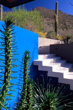Landscape Architect: Steve Martino