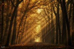 You can& have a light without a dark by martinpodt - I Love Trees Photo Contest Stunning Photography, Nature Photography, Our Planet Earth, Paris At Night, Autumn Scenes, Stairway To Heaven, Tree Forest, Photo Tree, Places Around The World