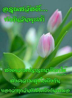 รูปภาพ Good Morning Greetings, Good Morning Good Night, Good Day, Thing 1, Happy Wednesday, Beautiful Roses, Nice, Respect, Happiness