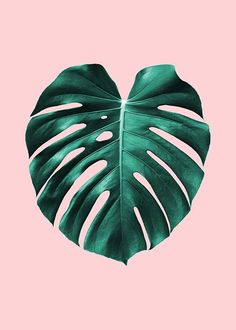 Monstera on pink Poster in the group Posters & Prints at Desenio AB (2435)