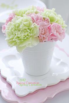 Carnations:  delicate petals