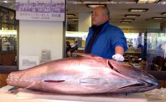 Anisakis, a disease caused by eating fish or seafood contaminated by parasites, is on the rise in Western countries where eating sushi and other dishes of raw or undercooked fish and seafood has gained popularity, according to a report released by BMJ Case Reports.