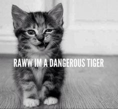 TIGER!! #cats