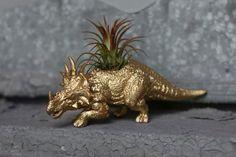 Dinosaur Planter Styracosaurus LIMITED Gold Tillandsia-Saurus