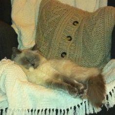 My Chair! >^.^
