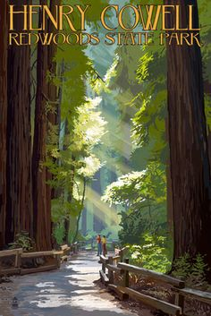 Henry Cowell Redwoods State Park - Pathway in Trees - Lantern Press Poster