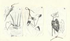 Sobre plantas - Desenhos - Raylander Mártis
