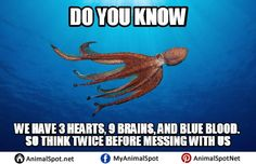 Octopus Memes Pictures Funny Animal Memes, Funny Animals, Davy Jones, Blue Bloods, Octopus, Did You Know, How To Find Out, Aqua, Florida