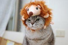 吾輩はライオンである。名前はまだない。