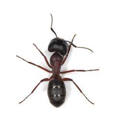 Domácí jed na mravence | Čarujeme