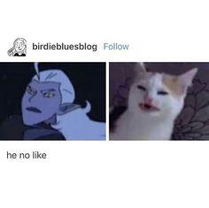 he no like