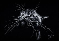 The Cat (2014) Pencil drawing by Ilona Borodulina | Artfinder