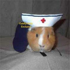 Nurse piggy