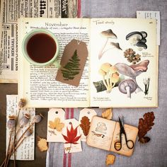 Edith Holden, Hello November, Cursed Child Book, You Look, Journalling, Instagram, Art, Art Background, Kunst