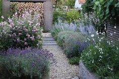 Long-blooded perennials and their value in the limit. The tallest flowering perennials in a row. Back Gardens, Small Gardens, Outdoor Gardens, City Gardens, Lavender Garden, Exterior, Garden Borders, Garden Cottage, Front Yard Landscaping