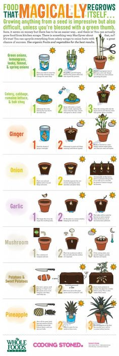 Food That Magically Regrows Itself from Kitchen Scraps – Cooking Stoned