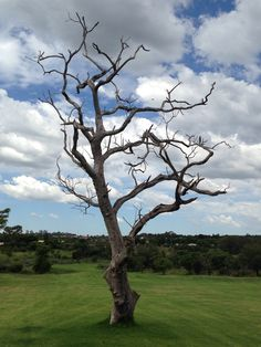 Pebble Rock Golf Course Golf Courses, Trees, Rock, Awesome, Plants, Locks, Rock Music, Plant, Home Decor Trees